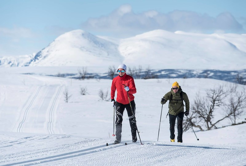 Gomobu - Cross country skiing.jpg